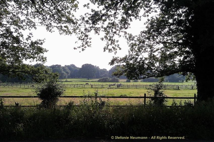 In der Morgendämmerung des Keltischen Herbstes 00 © Stefanie Neumann - All Rights Reserved.